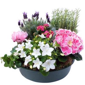 coupe de plantes pour deces