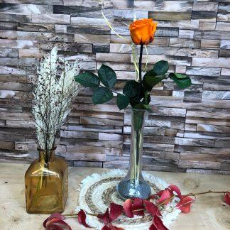 rose eternelle orange